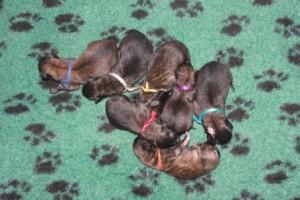 pups geboorte