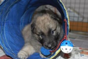 puppy's 043 web